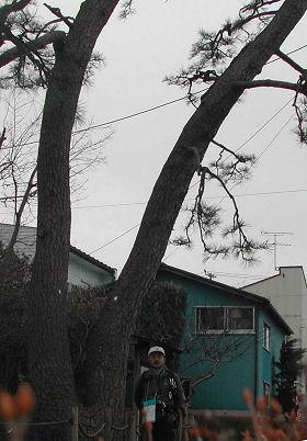 二木の松にて
